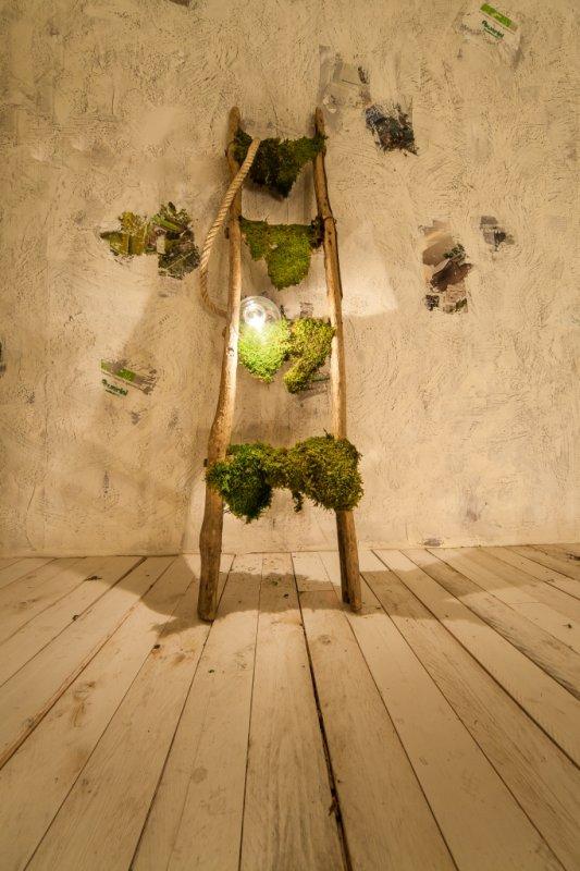 Allestimento mostra progettazione e manutenzione for Progettazione giardini siena