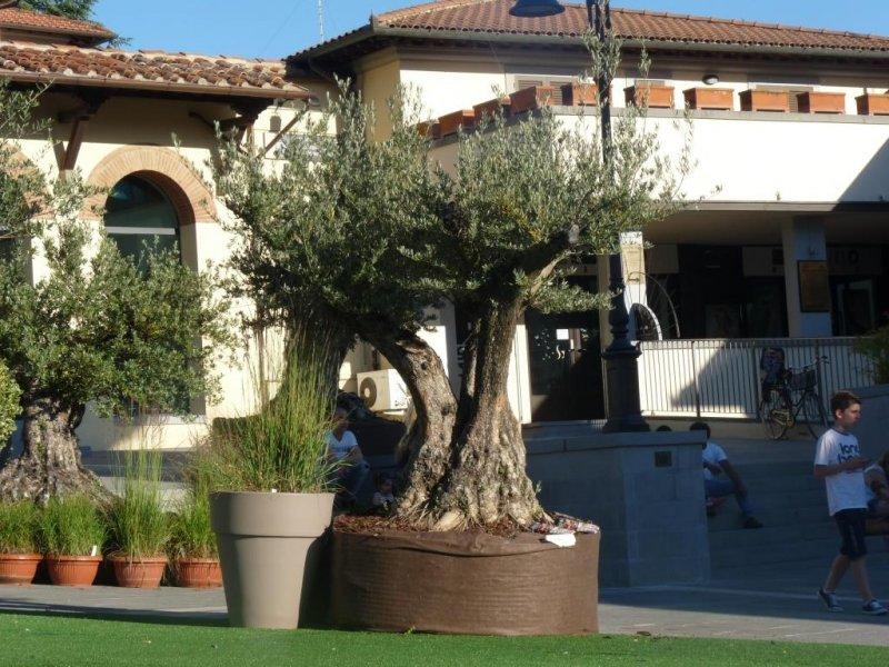 La piazza in verde progettazione e manutenzione giardini for Progettazione giardini siena