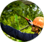 Potatura Alberi ad Alto Fusto Tree Climbing Arezzo, Firenze, Siena e Perugia