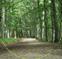 Opere Forestali, Taglio vegetazione infestante, Rimboschimenti Arezzo, Firenze, Siena e Perugia